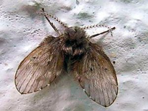 moscas humedad como eliminarlas